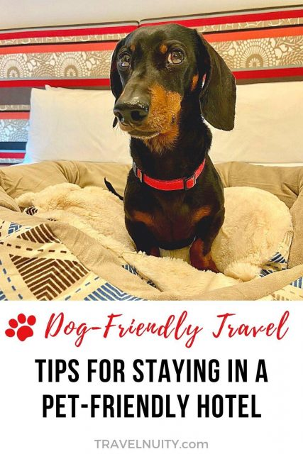 Pet-Friendly Hotel Tips