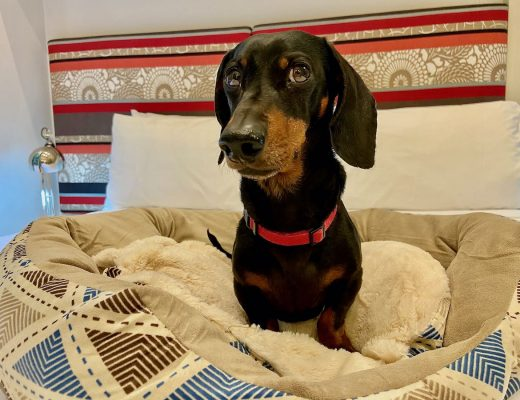 Pet-Friendly Hotels