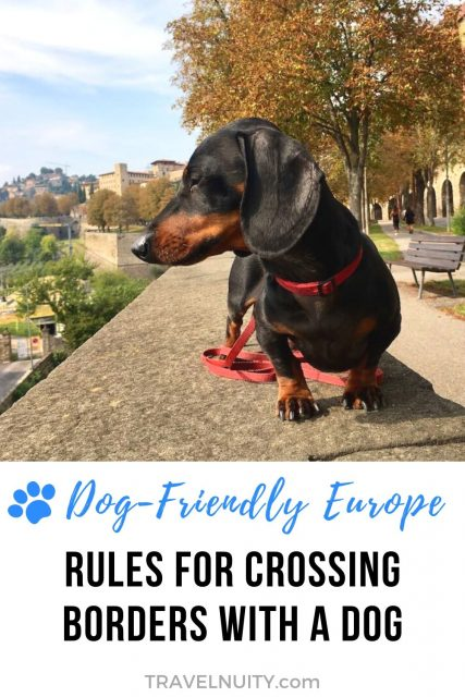 Rules for Travelling With a Dog Between European Countries