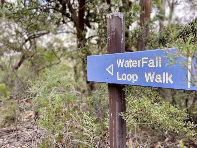 Dog-friendly bush walks near Sydney
