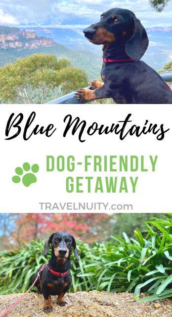 Blue Mountains Dog-Friendly Travel
