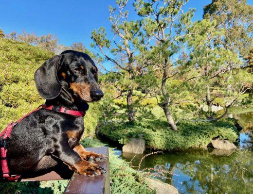 Dog-Friendly Gardens NSW