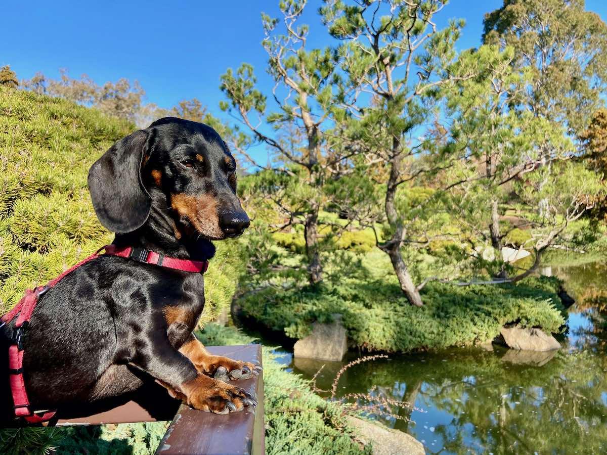 7 Beautiful Dog Friendly Gardens In Nsw Travelnuity