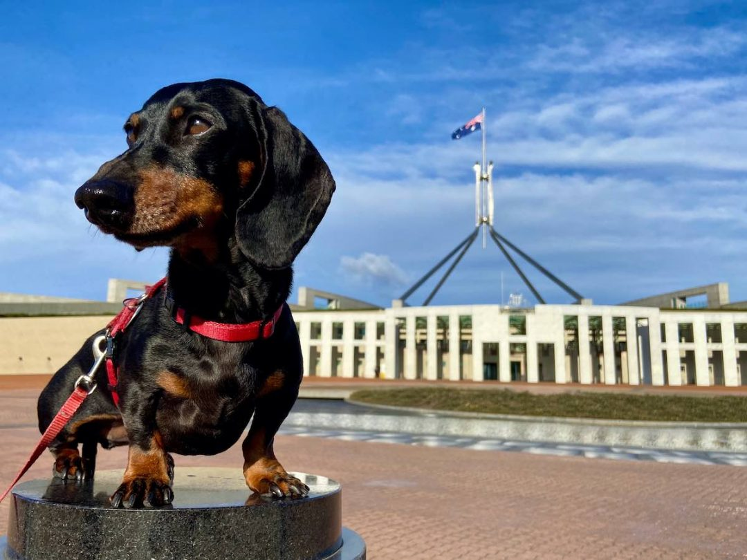 Dog-Friendly Canberra