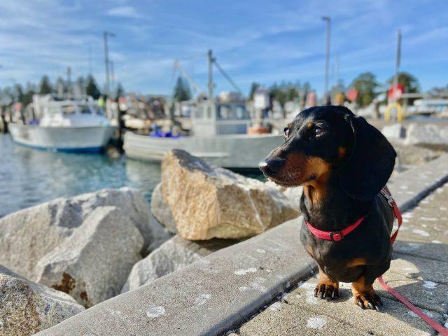 Dog-Friendly Far South Coast