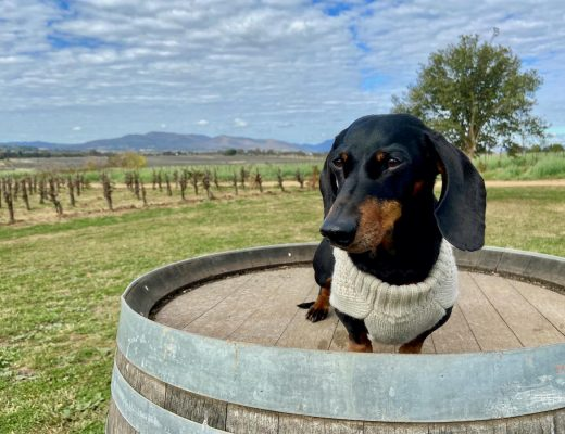 Dog-Friendly Mudgee