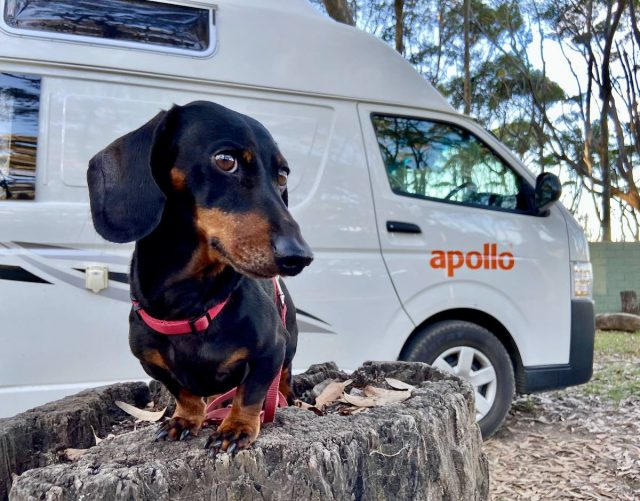 Pet-friendly campervan hire