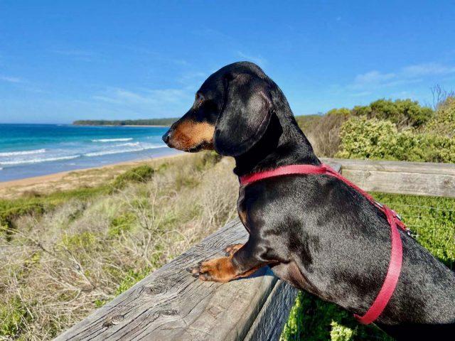 Dog-friendly Batemans Bay