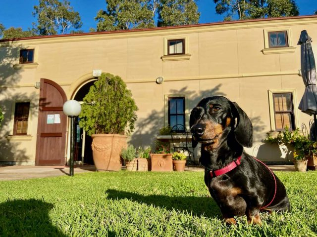 Dog-friendly Hunter Valley wineries