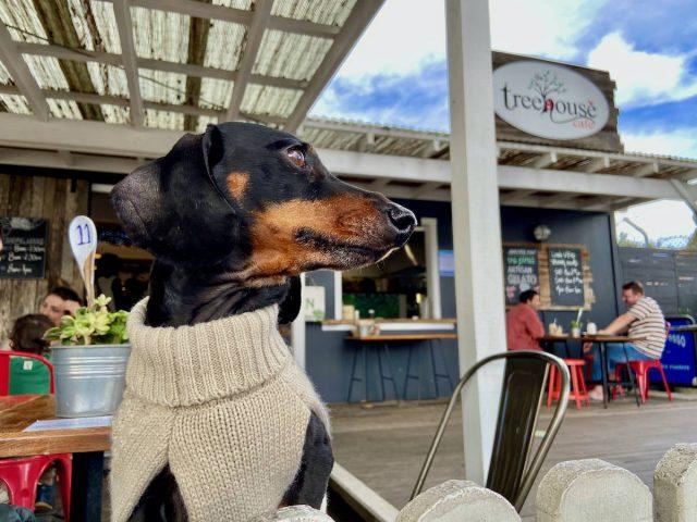 Dog-friendly Ulladulla Cafes