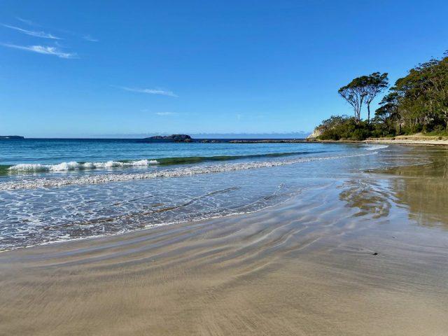 Dog-friendly beaches NSW