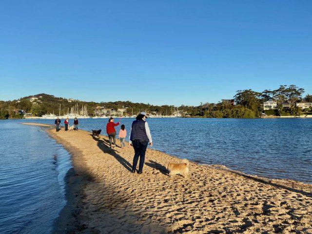 Dog beach Sydney