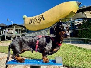 Dog-friendly Coffs Harbour