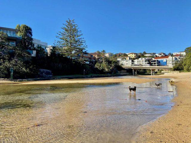 Manly dog beach