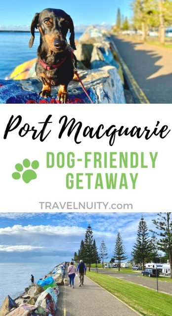 Port Macquarie Dog-Friendly Travel