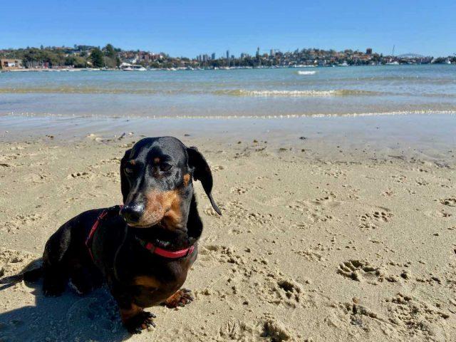 Rose Bay dog beach