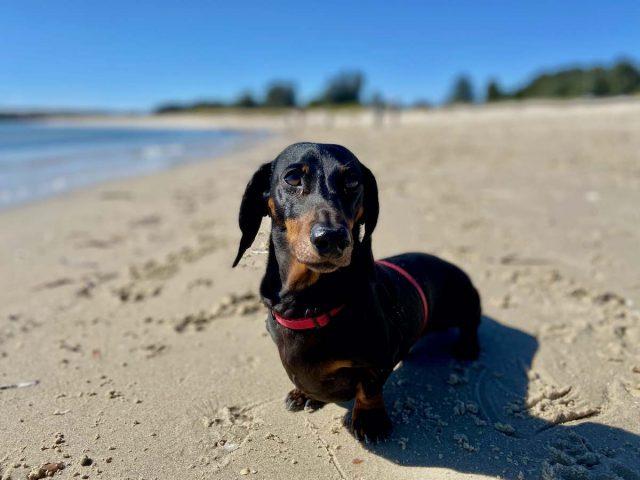Dog on Silver Beach
