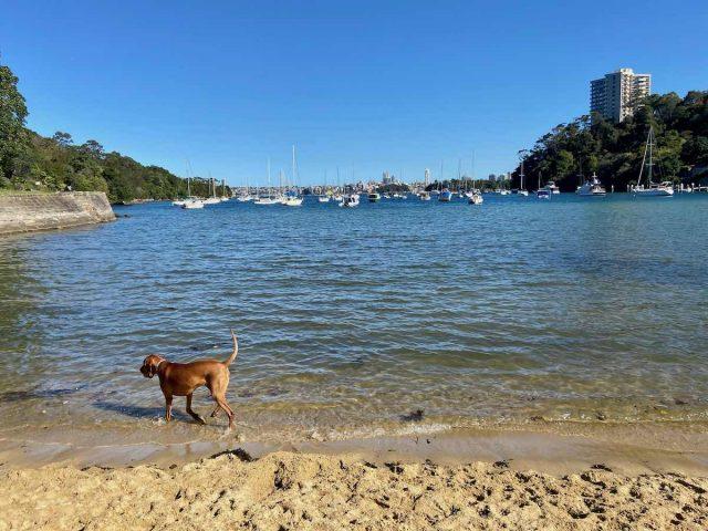 Mosman dog beach