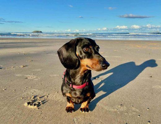 Pet-friendly accommodation NSW North Coast