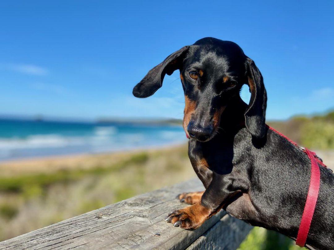 Pet-friendly accommodation South Coast