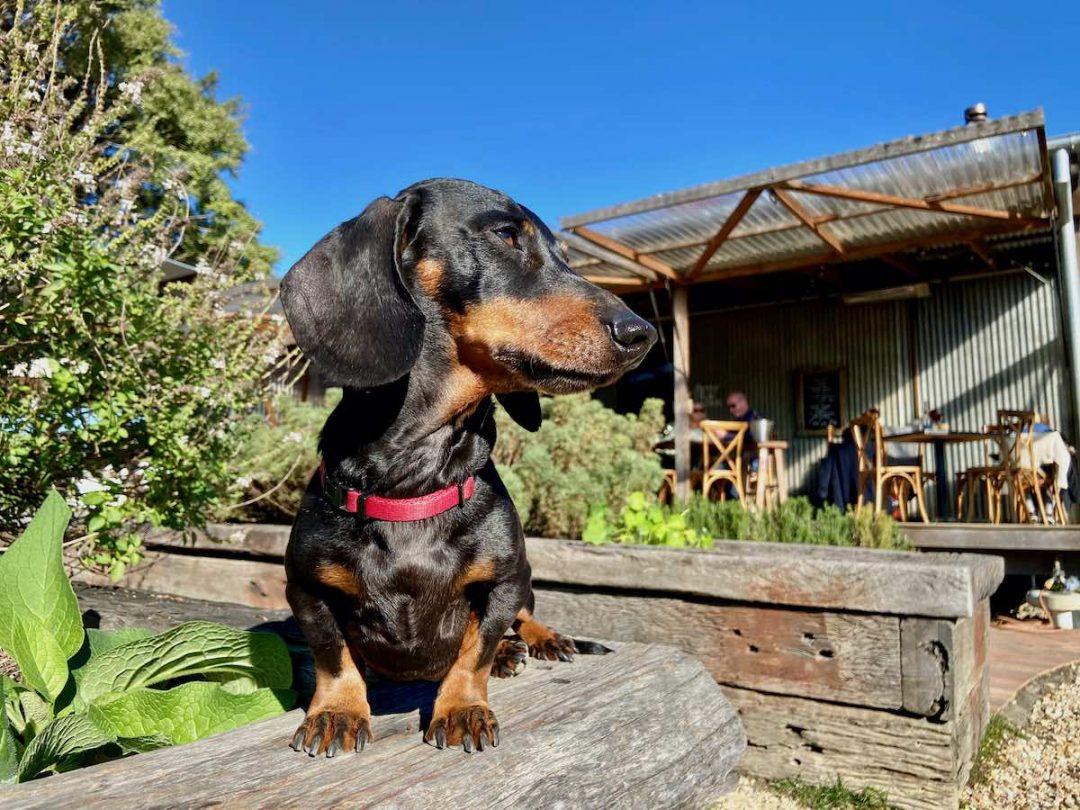 Dog-friendly NSW
