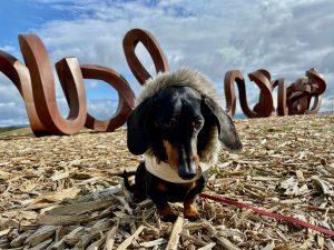Keep dog safe in Australia