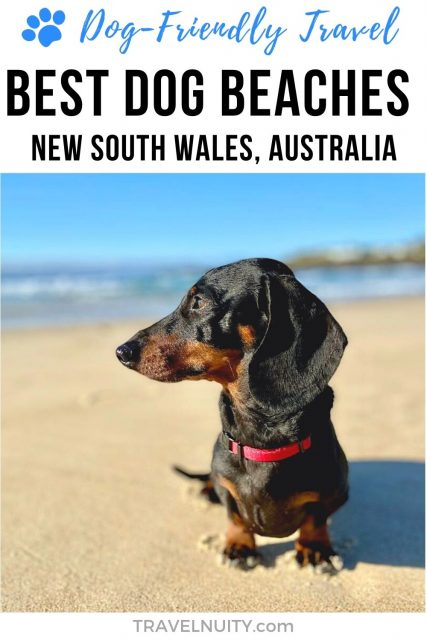 Best dog beaches in New South Wales, Australia pin