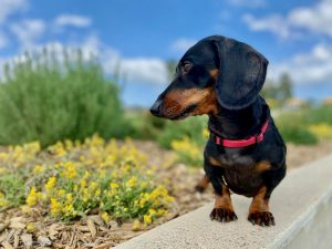 Taking pets overseas from Australia