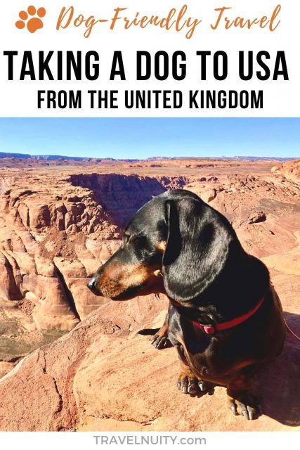 Pin: Taking a Dog to USA from UK