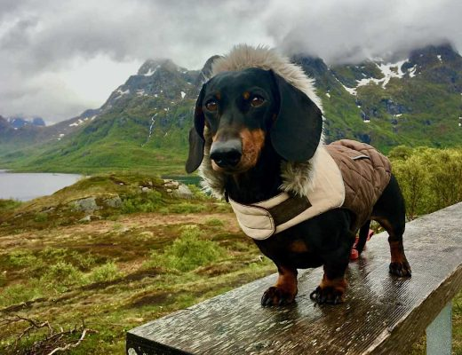 Travelling Internationally with a Dog - Norway