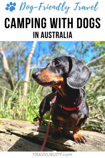 Pin: Camping with dogs in Australia
