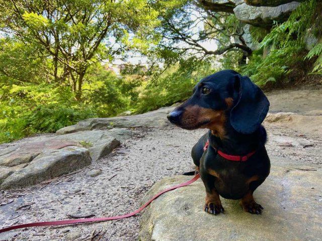 Dog-friendly hikes in Australia