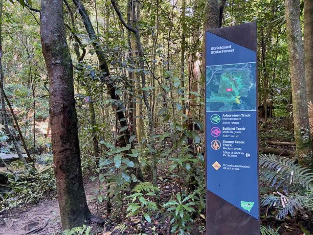 The dog-friendly hiking trails at Strickland State Forest