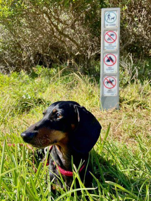 On-leash dog-friendly walks