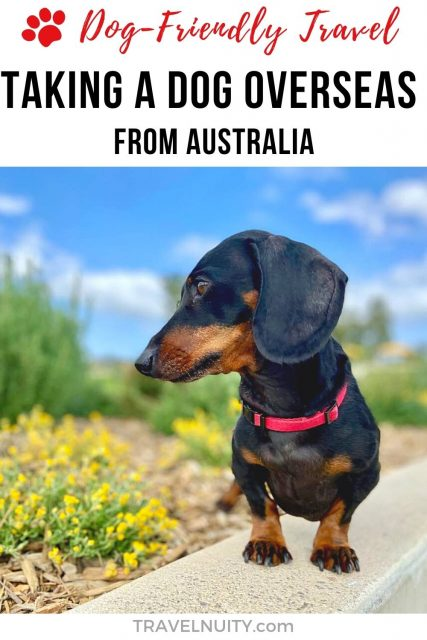 Pin: Taking a Dog Overseas from Australia