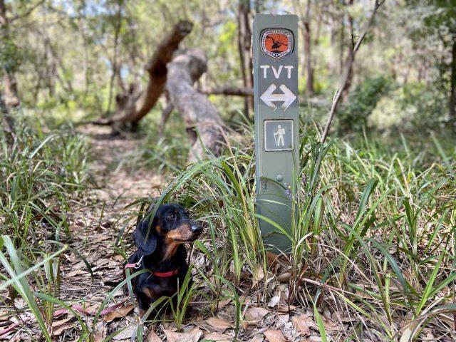 Dog-friendly hikes Sydney: The Wolli Creek Walking Track