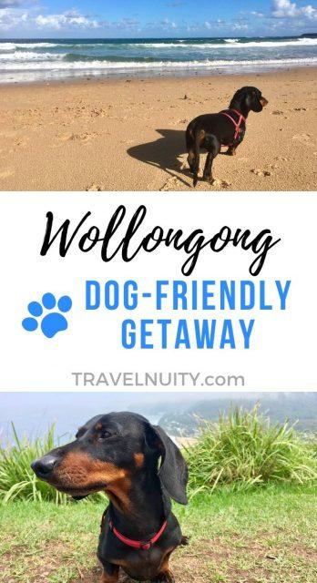 Dog-Friendly Wollongong, Australia