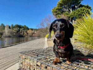 Dog-Friendly Daylesford