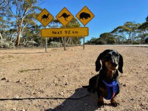 Dog-Friendly Nullarbor