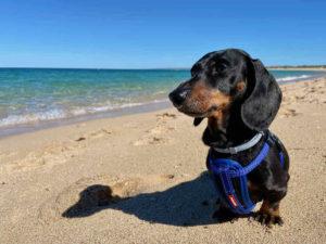 Dog-Friendly Exmouth