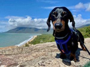Dog-Friendly Cairns