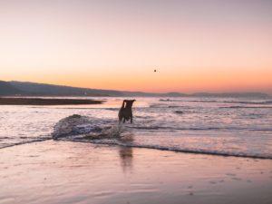 Dog-Friendly East Coast USA