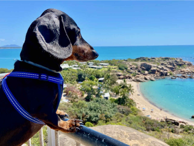 Rotary Lookout with Dog