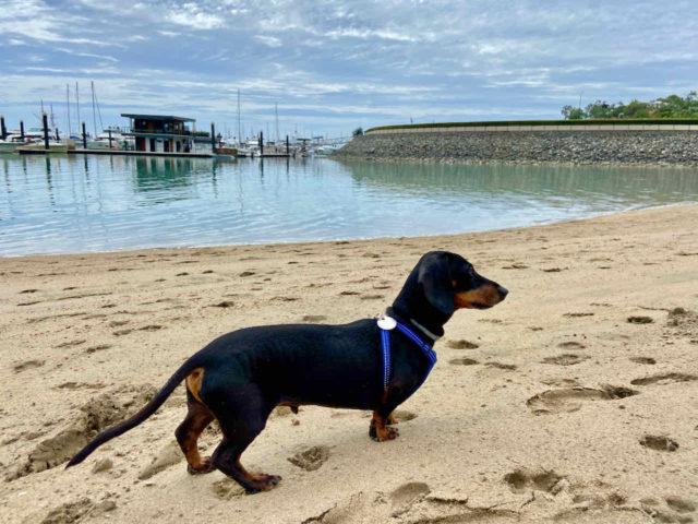 Shingley Beach with Dog