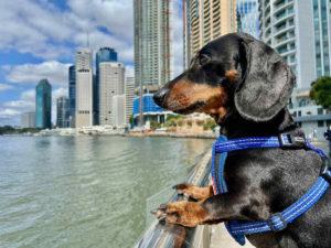 Dog-Friendly Brisbane