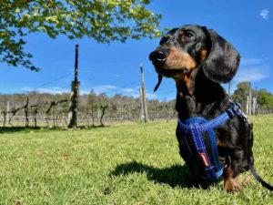 Dog-Friendly Granite Belt