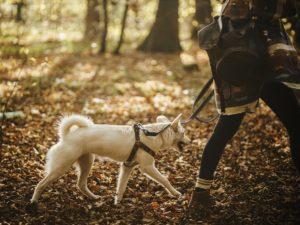 Dog-Friendly Walks Canada