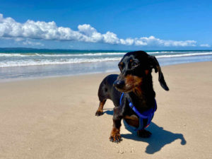 Dog-Friendly Beaches Brisbane
