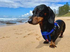 Dog-Friendly Beaches Wollongong