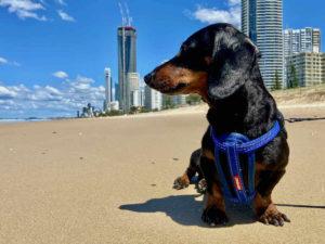 Dog-Friendly Gold Coast